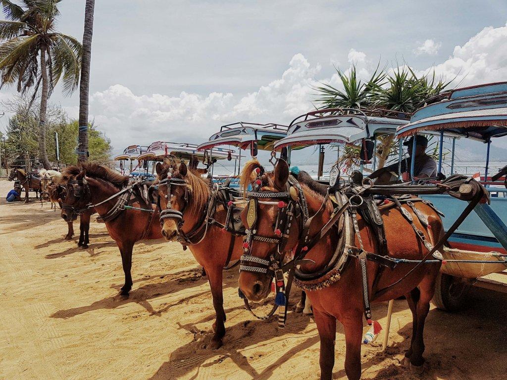 bryczki z końmi tzw cidomos