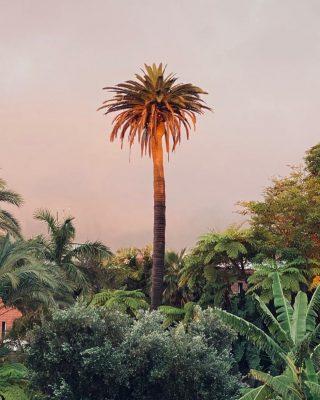 Wieczór z widokiem takim jak ten 🙏☺️🙏 _____________ #tenerife #tenerife🌴 #teneryfa #palmtrees #palma #palmy #vacationwibes #puntadelhidalgo #tenerifeisland #wyspykanaryjskie #gdzielecieć #bedejakwroce #behappy #mai #mai2021 #nice #views #setheworld